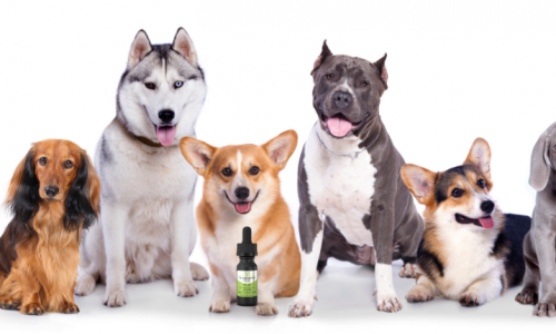 3 Best CBD Oil Products for Your Dog